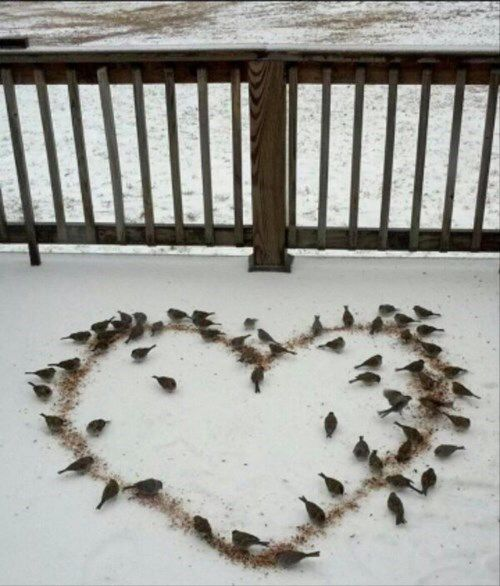 Love this <3 ... The birds will love it too!
