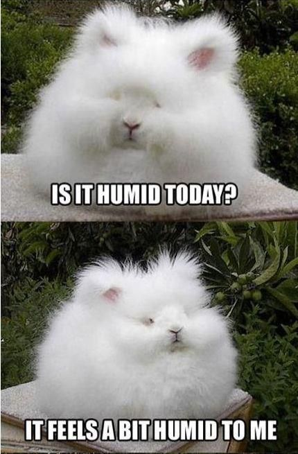 """""""It's the humidity!!"""""""