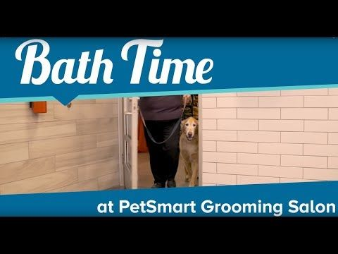 Your Local Dog Groomer Is As Close As Your Neighborhood Petsmart Academy Trained Safety Certified Pet Stylists Have Petsmart Grooming Petsmart Grooming Salon