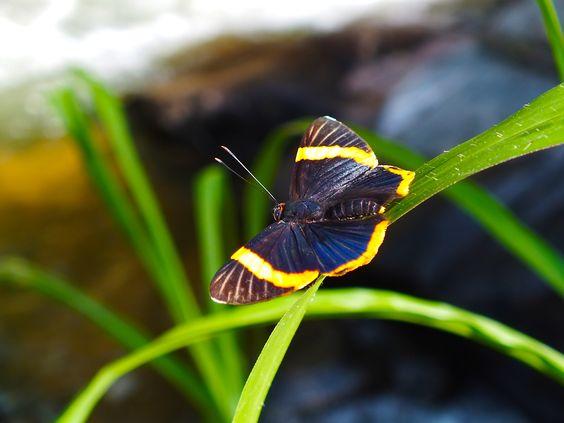borboleta-01
