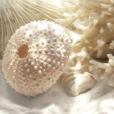 Coral and urchins