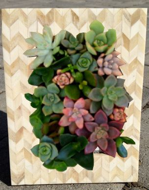 Vertical Living Succulent garden with Modern Bamboo Bone Acrylic Frame for your Table Top or wall