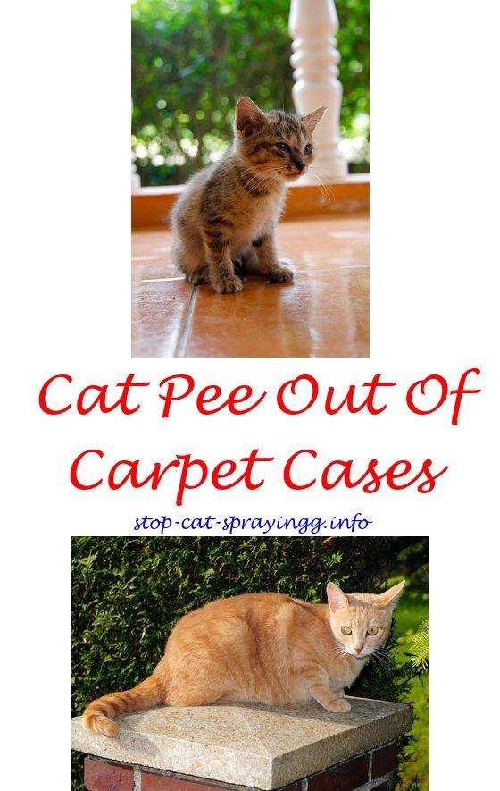 Cat Pee Smell Removal Vinegar Cat Spray Cat Spray Smell Cats
