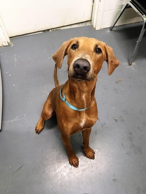 Pin By Dog Breeds 101 On Doberman Mix Pets Doberman Adoption