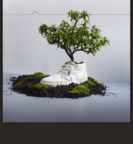 Shoes that biodegrade and grow into trees!