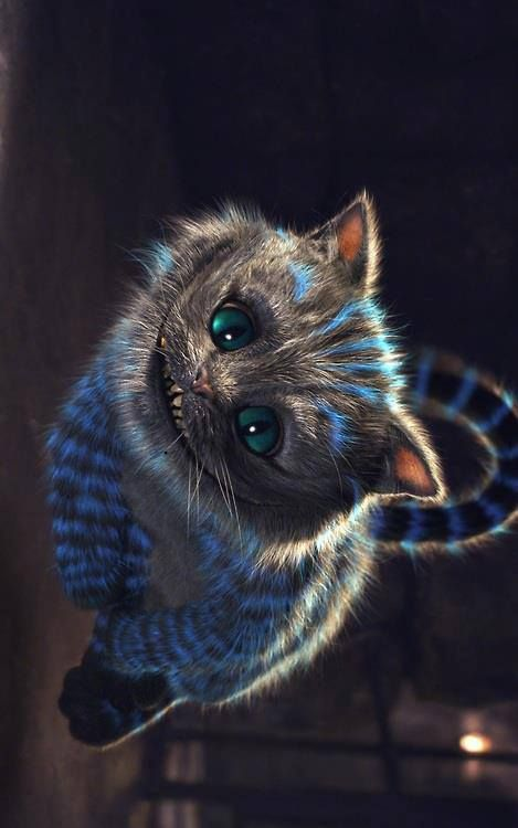 cheshire cat. - ✧ pintrest: feeysb ✧ - ♡ credit to owner ♡