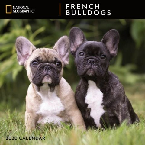 French Bulldogs National Geographic 2020 Calendar National
