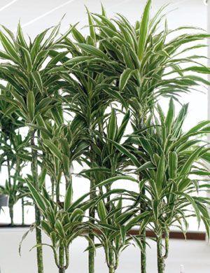 Πανέμορφα καλλωπιστικά φυτά