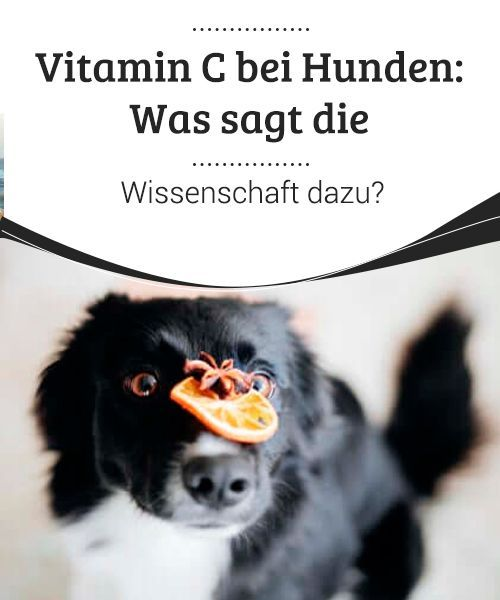 Vitamin C Bei Hunden Was Sagt Die Wissenschaft Dazu
