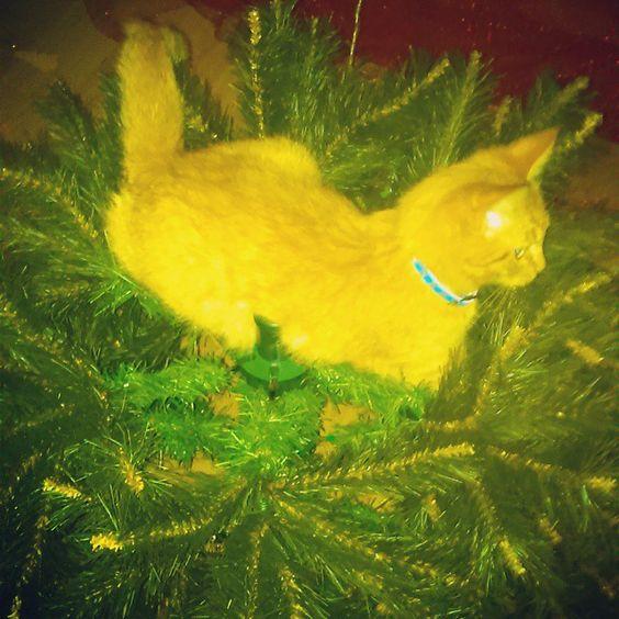 #Natal2014 #lego #depoisdevariastentativassemsucessotevedireitoaumasubidaarvorenatal=)