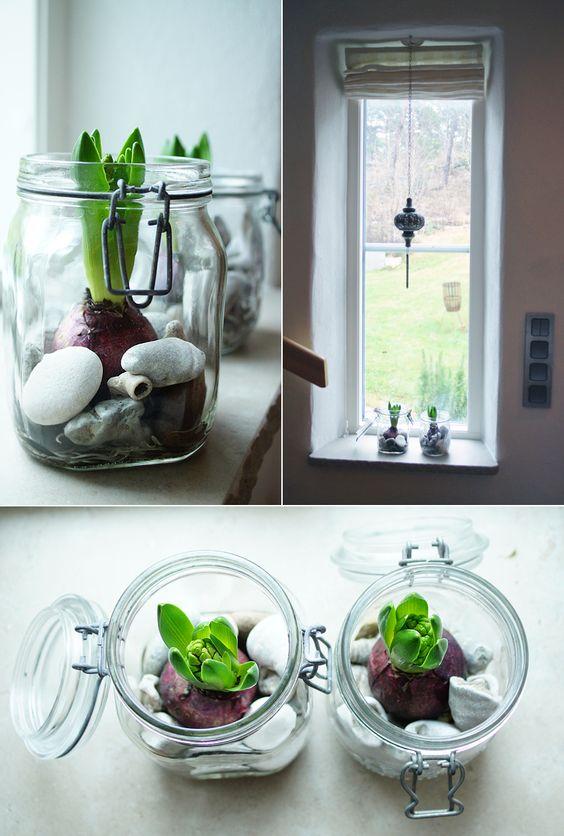 forced flower bulbs