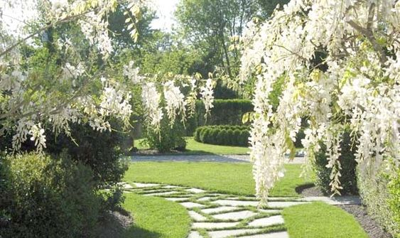 images of white gardens in the hamptons | Chinese White Wisteria. (Linda Ardigo)