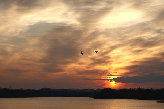 Ducks, Gudenåen, Silkeborg