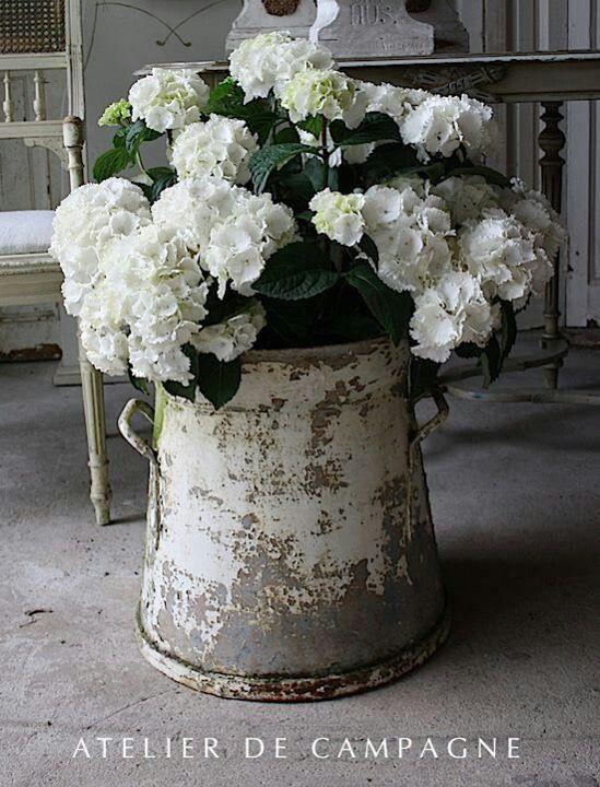 Witte hortensia in een oude pot erg mooi.