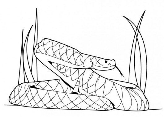 Wild Rattlesnake Coloring Picture Paginas Para Colorear Colores