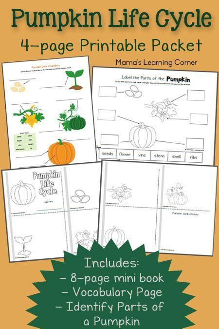 Free Pumpkin Life Cycle Worksheets