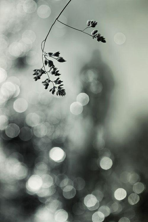A stranger in the light by Helle Lorenzen