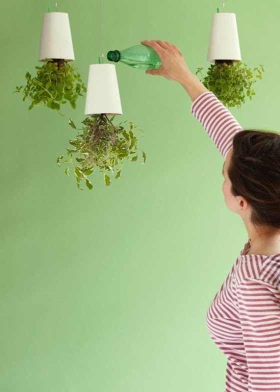 צמחים תלויים באוויר: