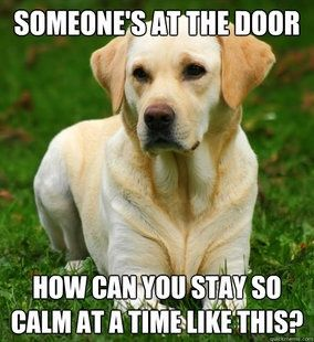 Someone's at the door how can yo be so calm?...that's what my dog is thinking