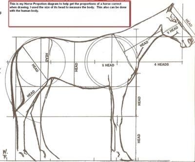 horse proportion diagram