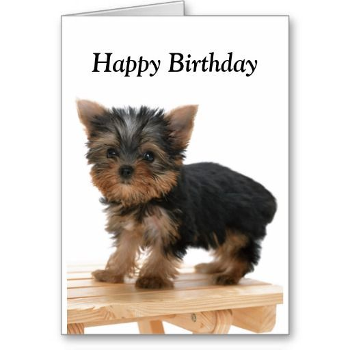 Yorkshire Terrier Dog Puppy Happy Birthday Card Cute Photo Of A Yorkie Pup Sure To Plea Yorkshire Terrier Dog Yorkshire Terrier Puppies Toy Yorkshire Terrier