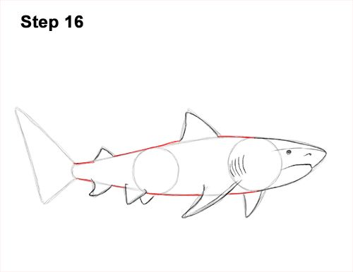 30++ Tiger shark clipart black and white ideas