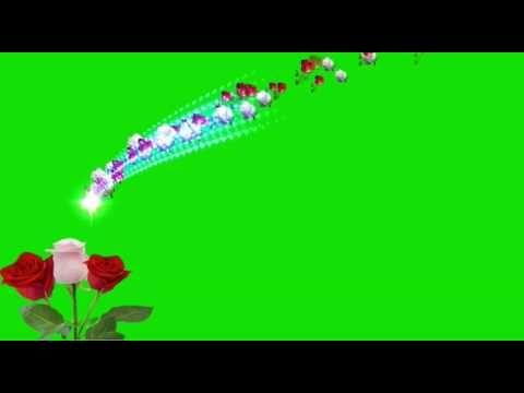 Rose Flower Green Screen Effects Youtube In 2020 Green Screen Background Images Green Screen Video Backgrounds Green Background Video