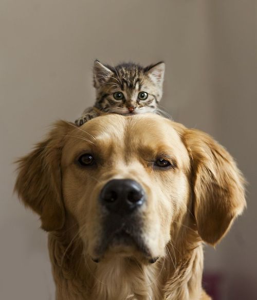 Whoever said dogs and cats always have to be on opposing sides?! #pets #cuteness #yourartyourway www.artnouv.com
