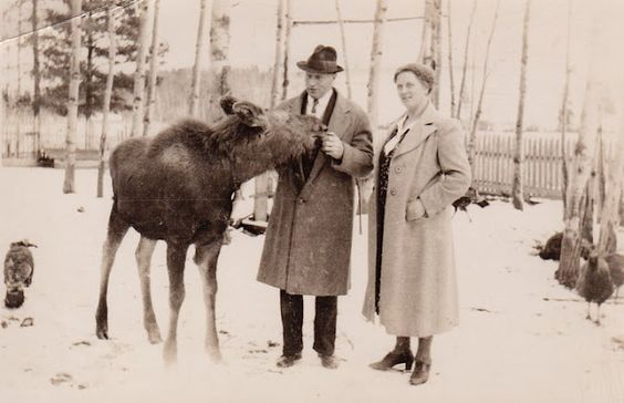 blogger's great-grandparent's had a pet moose :)