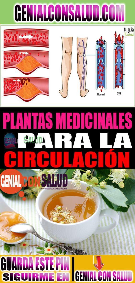 Hierbas Medicinales Para Mejorar La Circulación En Las Piernas Health Helpful Hints Tips