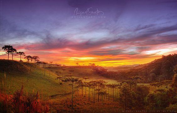 Araucaria Vale by =Miguel-Santos on deviantART