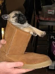 Pug in an Ugg!
