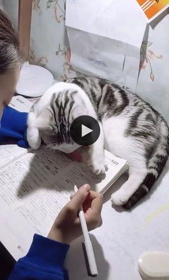 Ei, você já estudou demais, agora é hora de me dar atenção