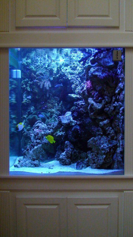 My saltwater tank