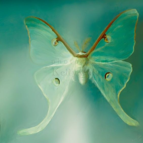Luna moth. I will never forget Mom capturing a Luna moth and breaking off the branch where it was laying eggs. She placed it gently into a large cast iron skillet and we watched it together at the kitchen table. One of my most favorite memories ever!