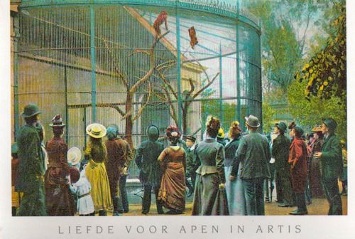 old postcard, amsterdam zoo