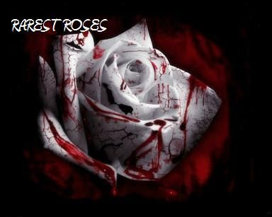 Rarest Rose in the World | RAREST ROSES