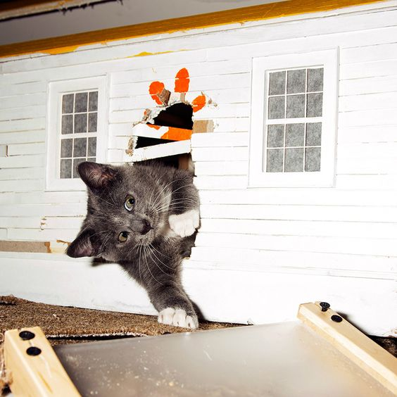 Heeeere's Kitty!  Curious cat claws its way inside tiny doll house.