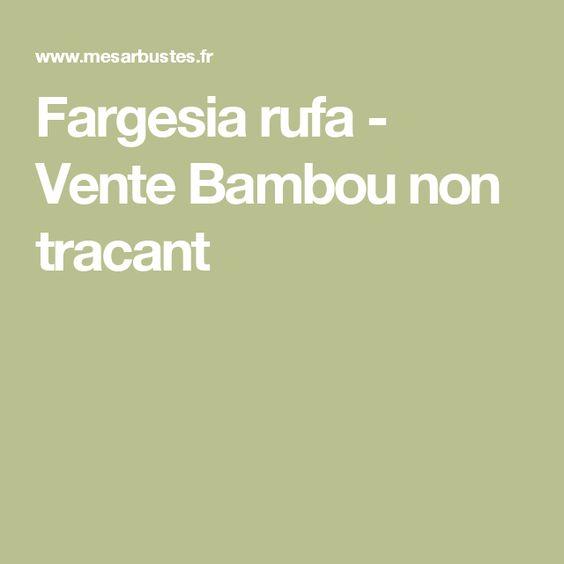 Fargesia rufa - Vente Bambou non tracant