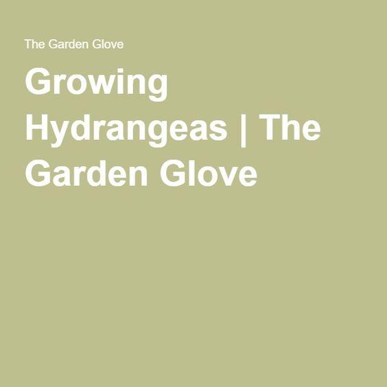 Growing Hydrangeas | The Garden Glove