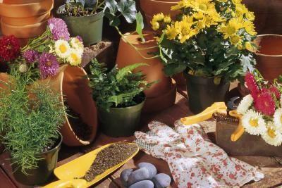 Organic Rust Control on Plants