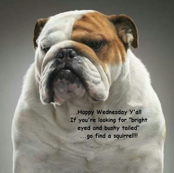 Happy Thursday Dog Pictures