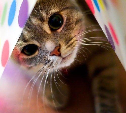 such beautiful eyes!