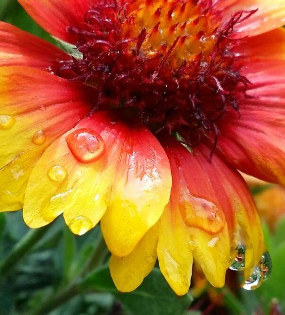 Goblin Flower #noedit #weisstribe #mybackyard