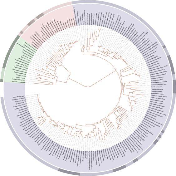Representación gráfica del Árbol de la vida moderno en el proyecto Web