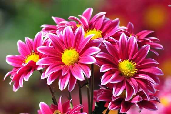 Create the perfect bouquet with this awesome information about flowers.