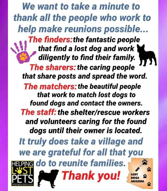 We Greatly Appreciate Everyone That Dedicates Their Time To Help Lost Dogs Get Back To Their Families It Takes A Village Losing A Dog Dogs Dog Safe