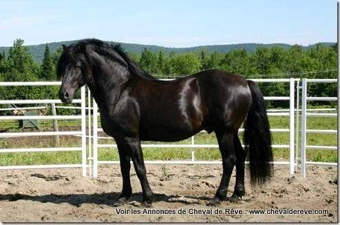 Les Annonces De Cheval De Reve Plus De 3000 Annonces Equestres Magasinez Chevaux Selles Equipements Pensions Cours R Canadian Horse Black Horses Horses