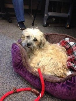 Not long ago, a dirty, matted dog was picked up as a stray and taken to the Contra Costa Animal Shelter in Martinez, Calif.ID number A767941 Age 4 years Contra Costa Animal Shelter, 4800 Imhoff Rd., Martinez, CA Shelter phone number 925-335-8330