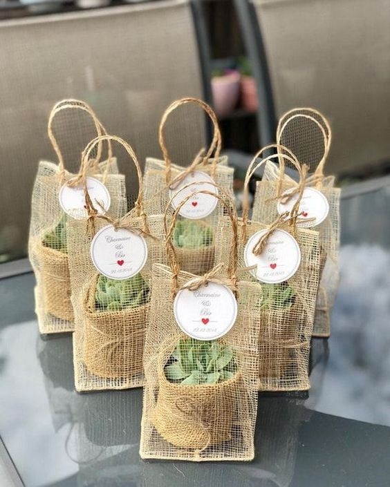 cadeau-invité-miniplante-succulente